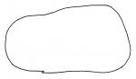 Brissopsis luzonica (lateral)