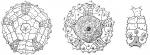 Habrocidaris argentea (coronal plating)