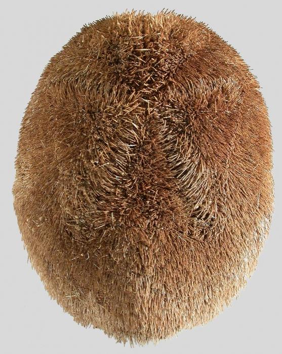 Metalia nobilis (aboral)