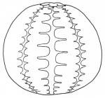 Microcyphus annulatus (lateral)