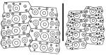 Nudechinus ambonensis (interambulacral + ambulacral plates)