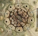 Plesiodiadema indicum (apical plates)