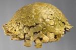 Podophora pedifer (lateral)