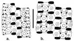 Temnotrema hawaiiense (ambulacral + interambulacral plates)