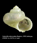 Solariella tuberculata Bagirov, 1995. Holotype