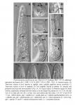 Parastomonema papillosum Kito & Aryuthaka, 2006