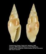 Vexillum baeri Poppe, Tagaro & R. Salisbury, 2009