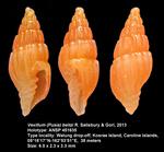 Vexillum (Pusia) beitzi R. Salisbury & Gori, 2013