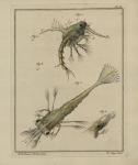 Slabber (1778, pl. 05)