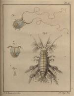 Slabber (1778, pl. 11)