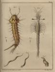 Slabber (1778, pl. 15)