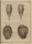 Slabber (1778, pl. 16)
