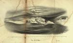 Dubar (1828, pl. 13)