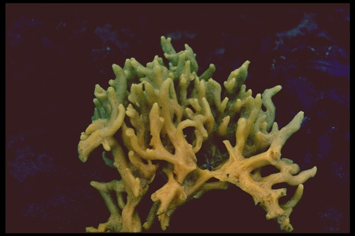 Breadcrumb Sponge