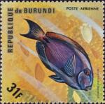 Acanthurus bahianus