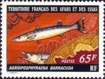 Agrioposphyraena barracuda
