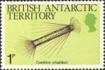 Corethron criophilum