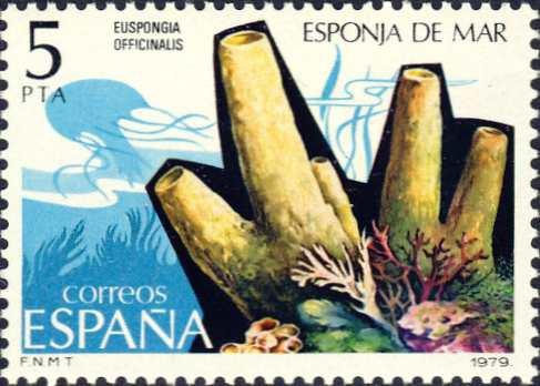 Euspongia officinalis