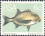 Coracinus capensis