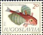 Dactylopterus volitans