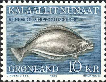 Reinhardtius hippoglossoides