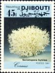 Seriatopora hystrix
