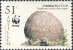 Stephanocoenia intersepta