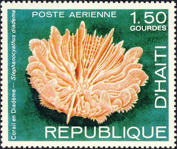 Stephanocyathus diadema