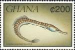 Syngnathus rostellatus