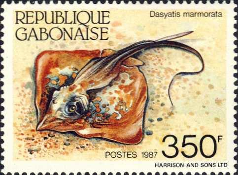 Dasyatis marmorata