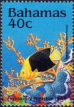 Holacanthus tricolor