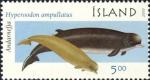 Hyperoodon (Hyperoodon) ampullatus