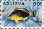 Hypoplectrus guttavarius