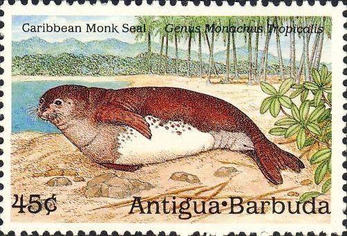 Monachus tropicalis