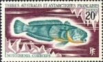 Notothenia coriiceps