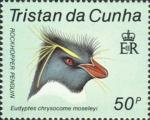 Eudyptes chrysocome moseleyi