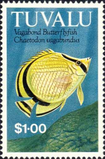 Chaetodon vagabundus