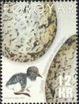 Haematopus ostralegus