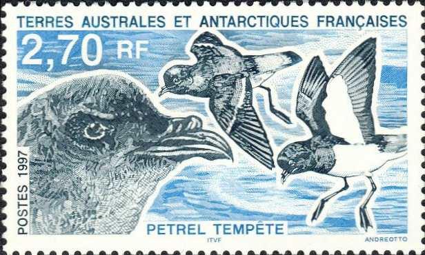 Hydrobates pelagicus