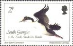 Phalacrocorax atriceps