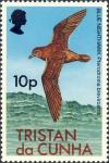 Pterodroma brevirostris