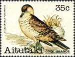 Stercorarius pomarinus