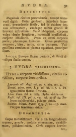 Pallas (1766), page 31