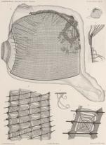 Van Beneden; de Selys Longchamps (1913, pl. 01)