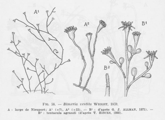 Leloup (1952, fig. 58)