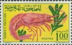 Aristeomorpha foliacea