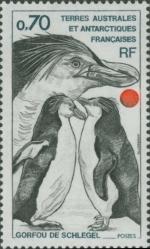 Eudyptes schlegeli