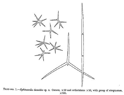 Sphinctrella theneides