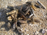 hondshaai kapsels