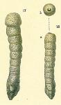 Clavulina multicamerata